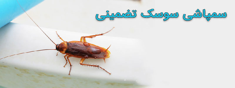 سم پاشی سوسک در اصفهان