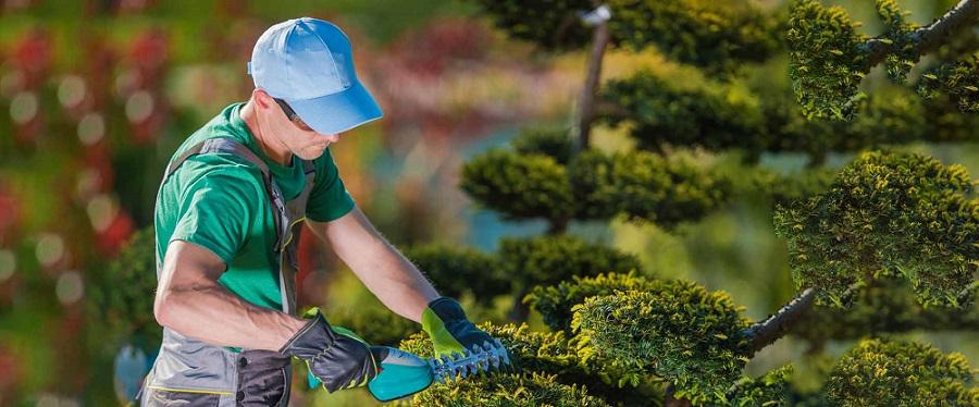 خدمات باغبانی منازل - خدمات باغبانی در اصفهان