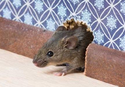 سمپاشی انواع موش ها و راه های مبارزه با آن :